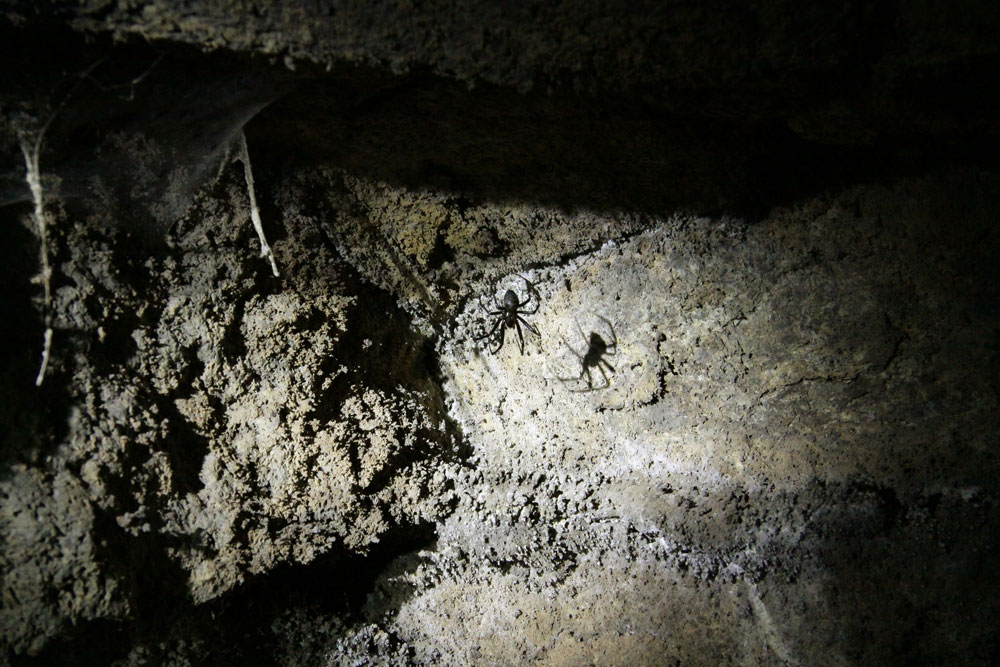 spiders in the cave
