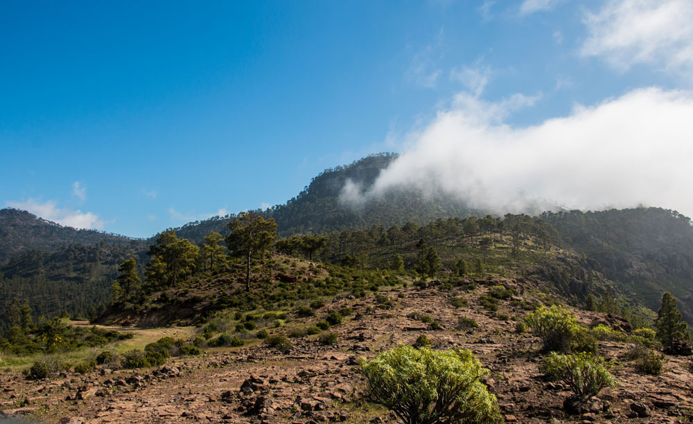 View of the cloudy summit of the Inagua from Laurelillo