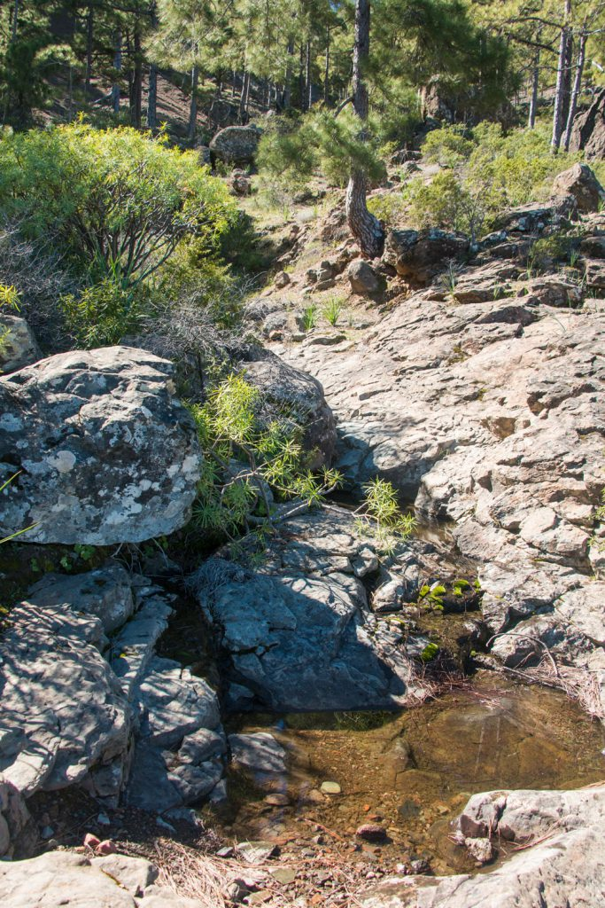 Gran Canaria - hiking through pine forests