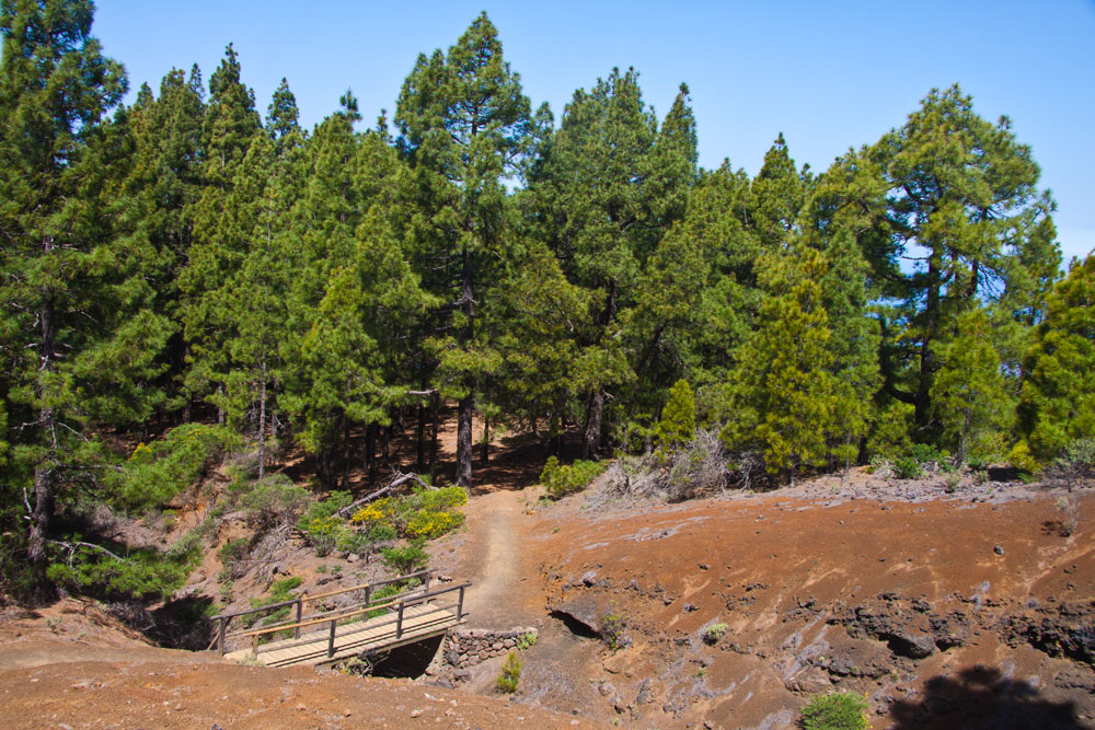 Ruta de los Volcanes - from time to time the path leads through pine forests and here over a small bridge.