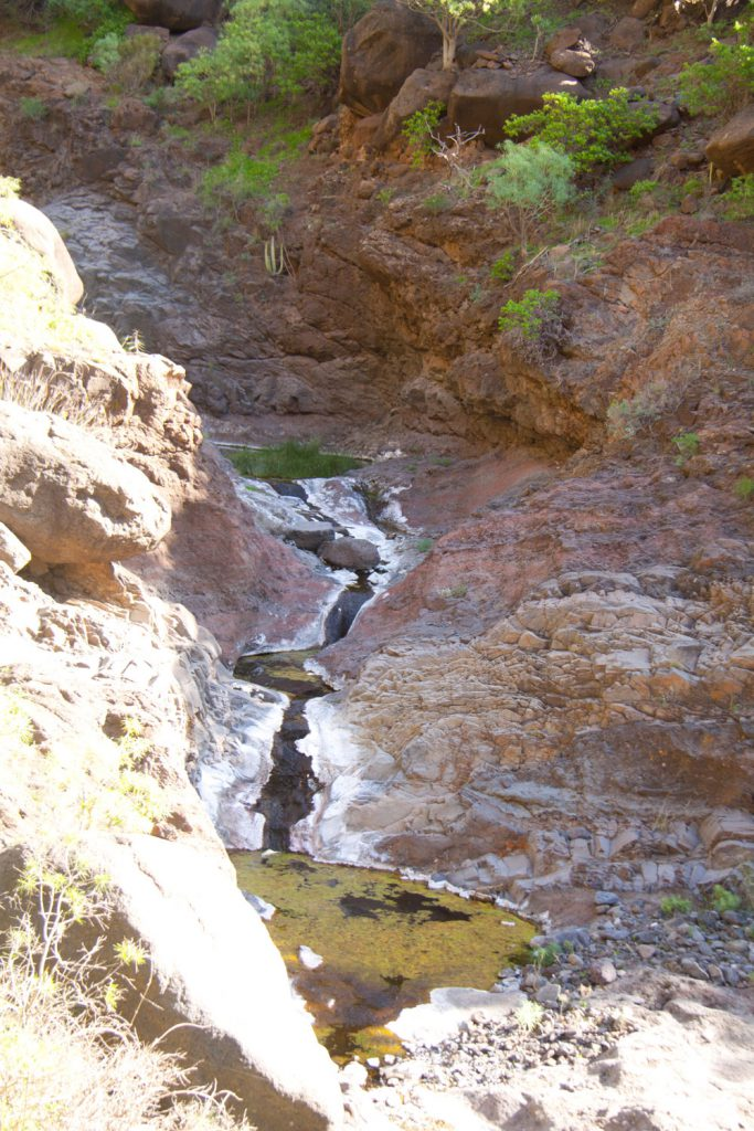 In the Barranco bed of the Natero you will often find water