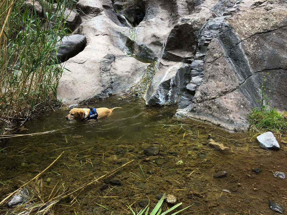 water in the Masca gorge - dogs like it