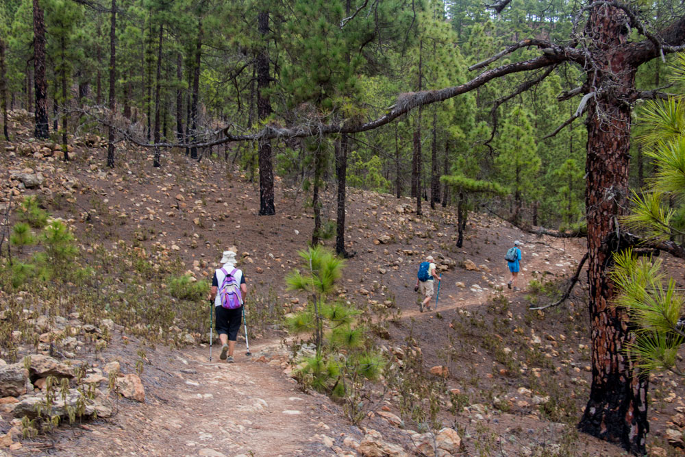 hikers in the pine forest
