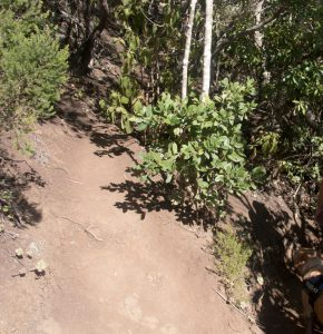 hiking path through the Laurel forest