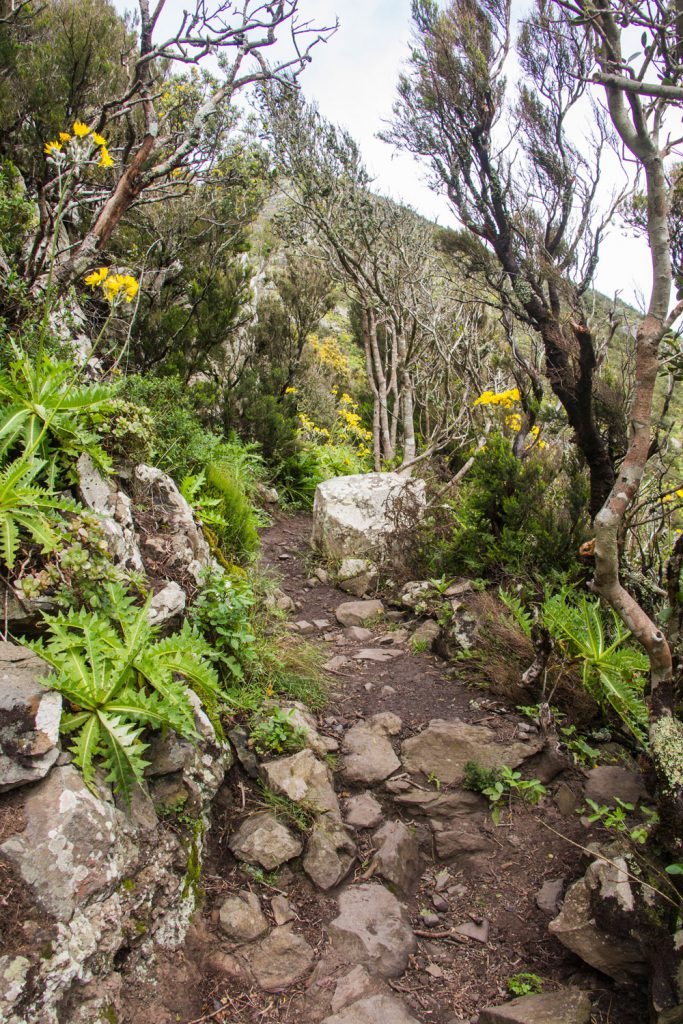 hiking path in the cloud forest