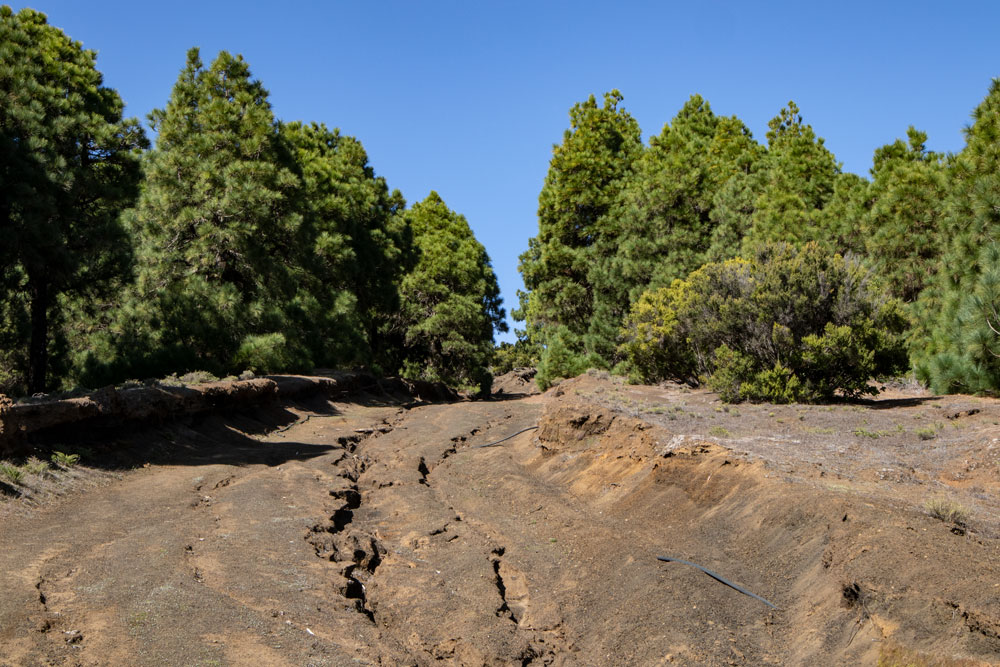 washed out roads through pine forests