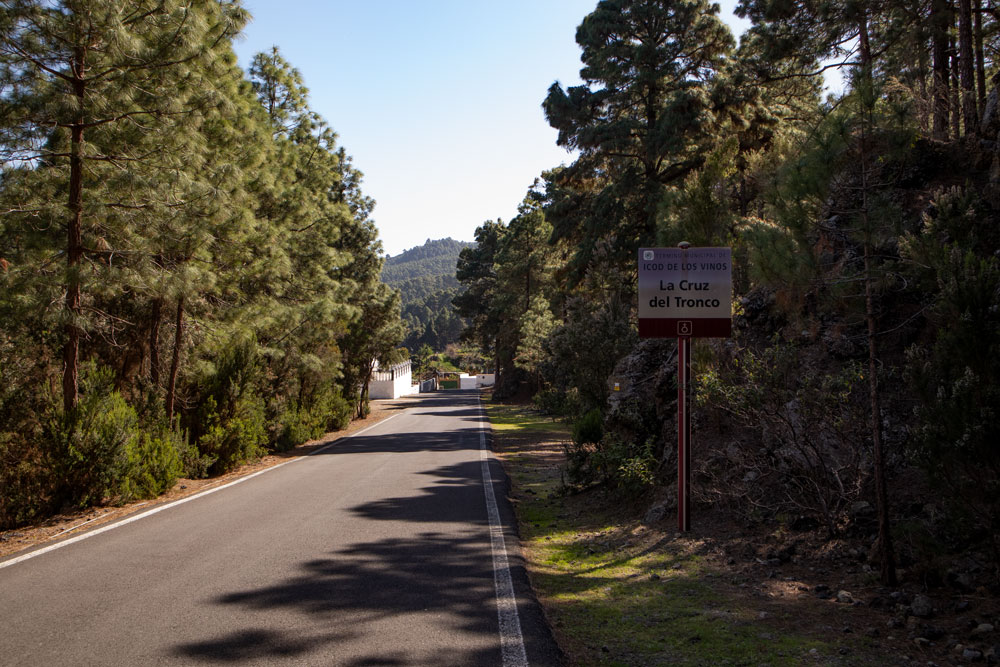 La cruz del Tronco - hiking path on the street leading through pine forest
