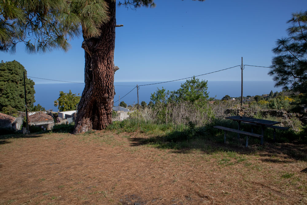 rest place under an old pine tree with view in Valois - hiking path La Florida