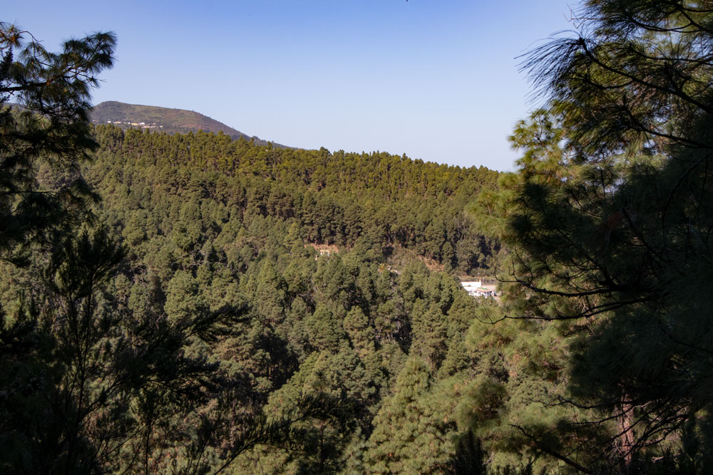 view over the dense pine forests of the north cloth to La Florida