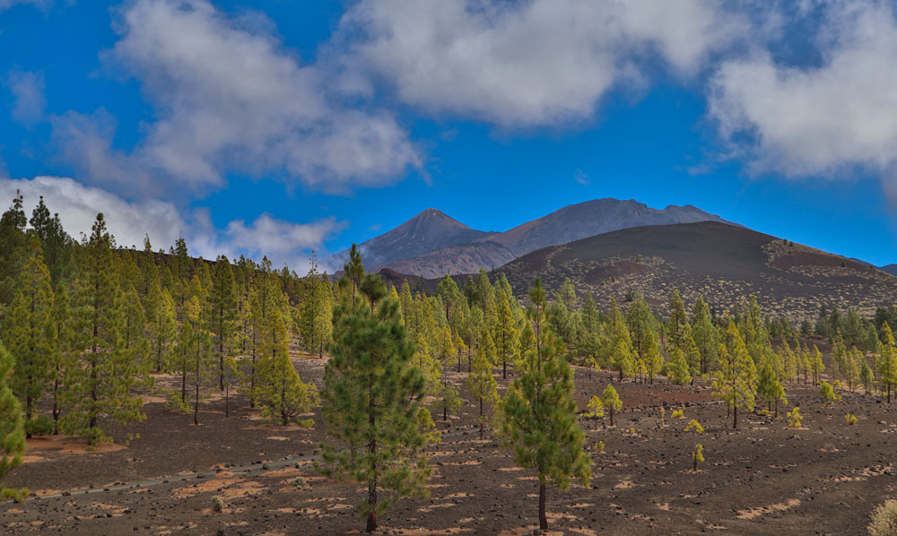 view on Mount Teide, Pico Viejo and pine woods