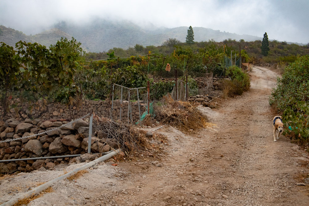 Road - Hiking trail through vineyards and gardens