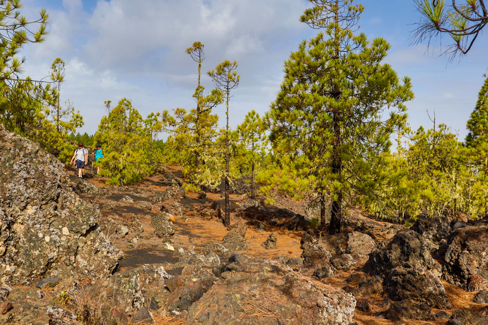 hiking over volcano stones and through green pine trees
