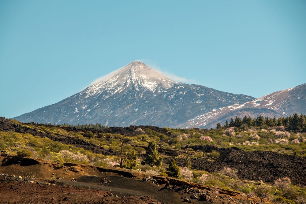 view on Mount Teide with almond trees