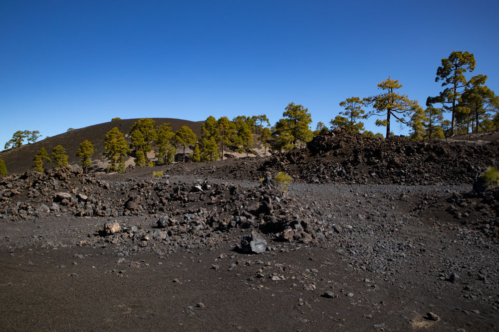 Black volcanic landscape, green pines and blue sky