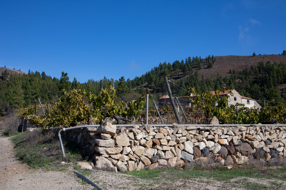 Driving and hiking trail at a finca with vineyards