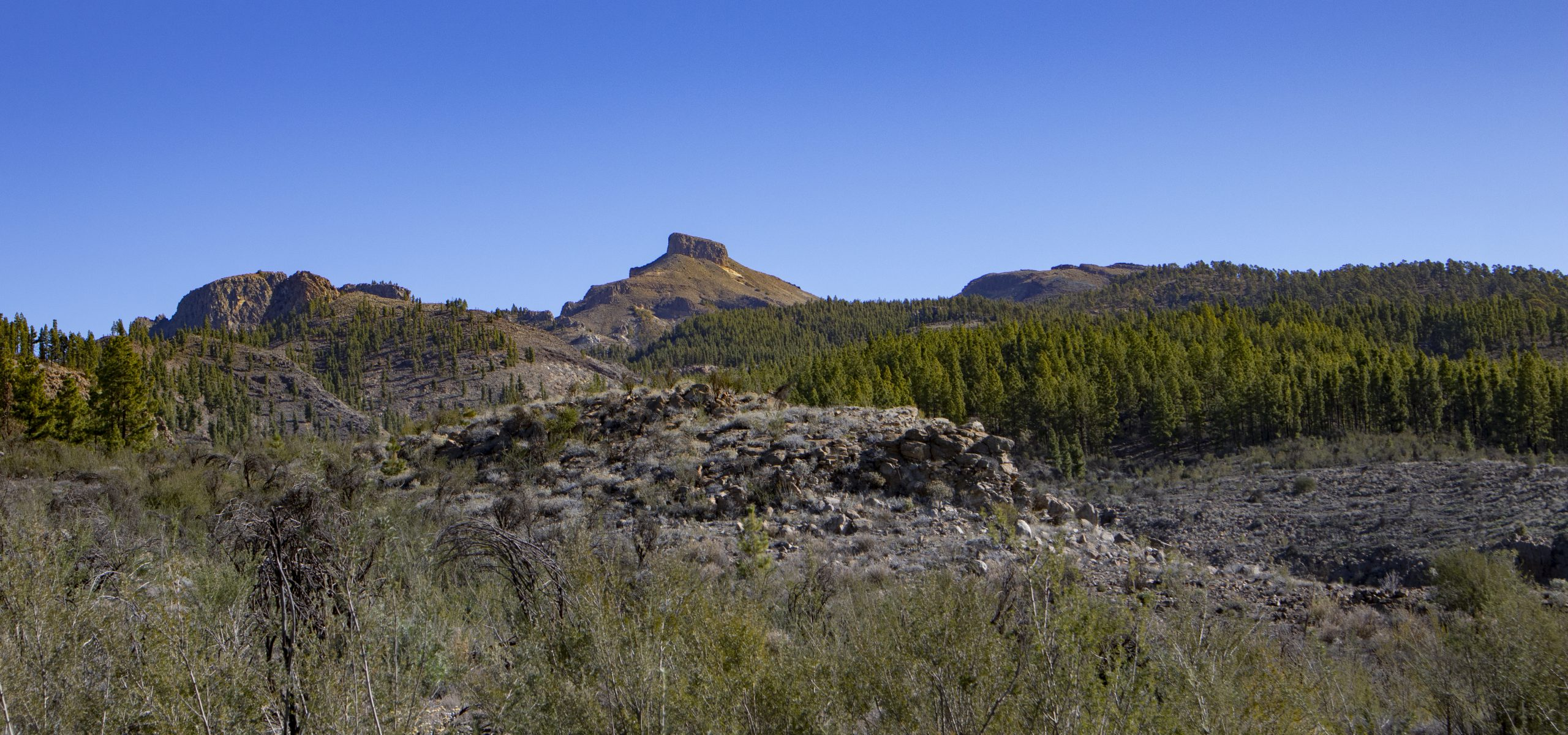 View of the mountains near the Cañadas with pine forest