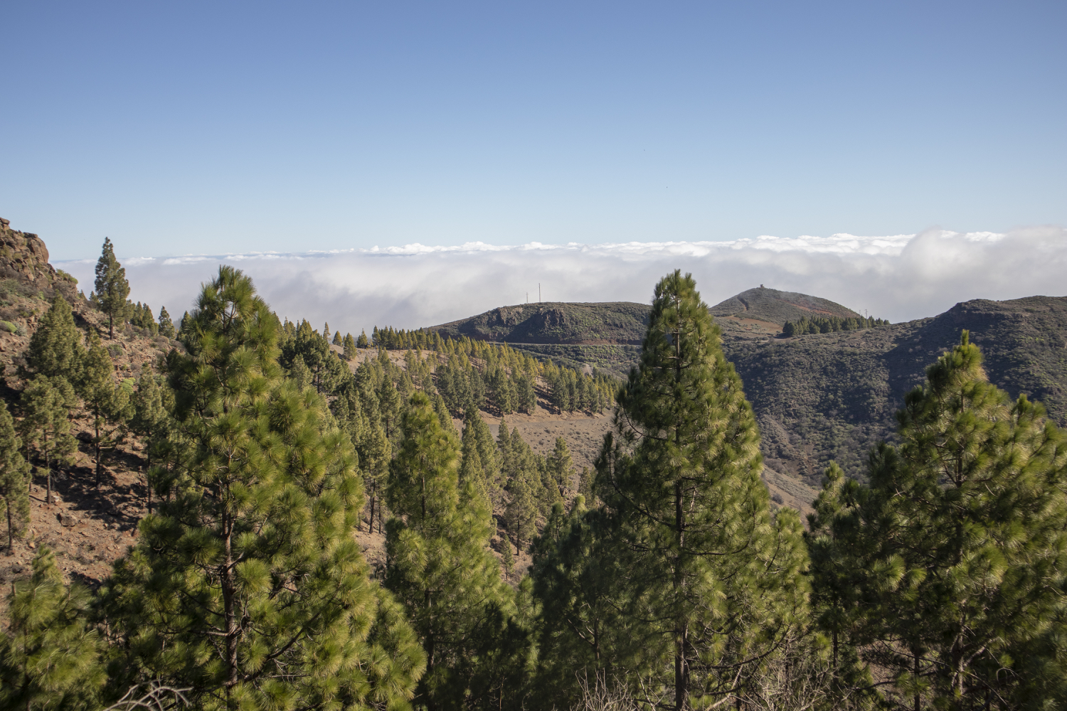 View over the pine forests and clouds in the height
