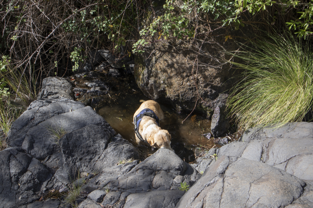 Dog has discovered water in the Barranco