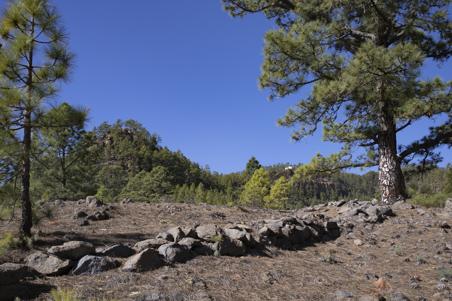 Hiking trail over plateaus and through pine forests