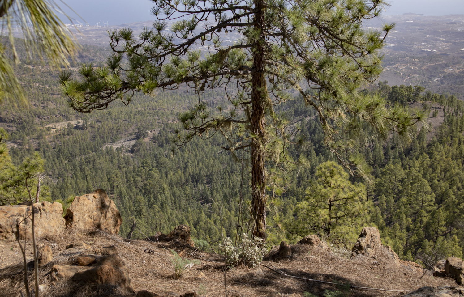 Hiking trail through pine forests with magnificent views