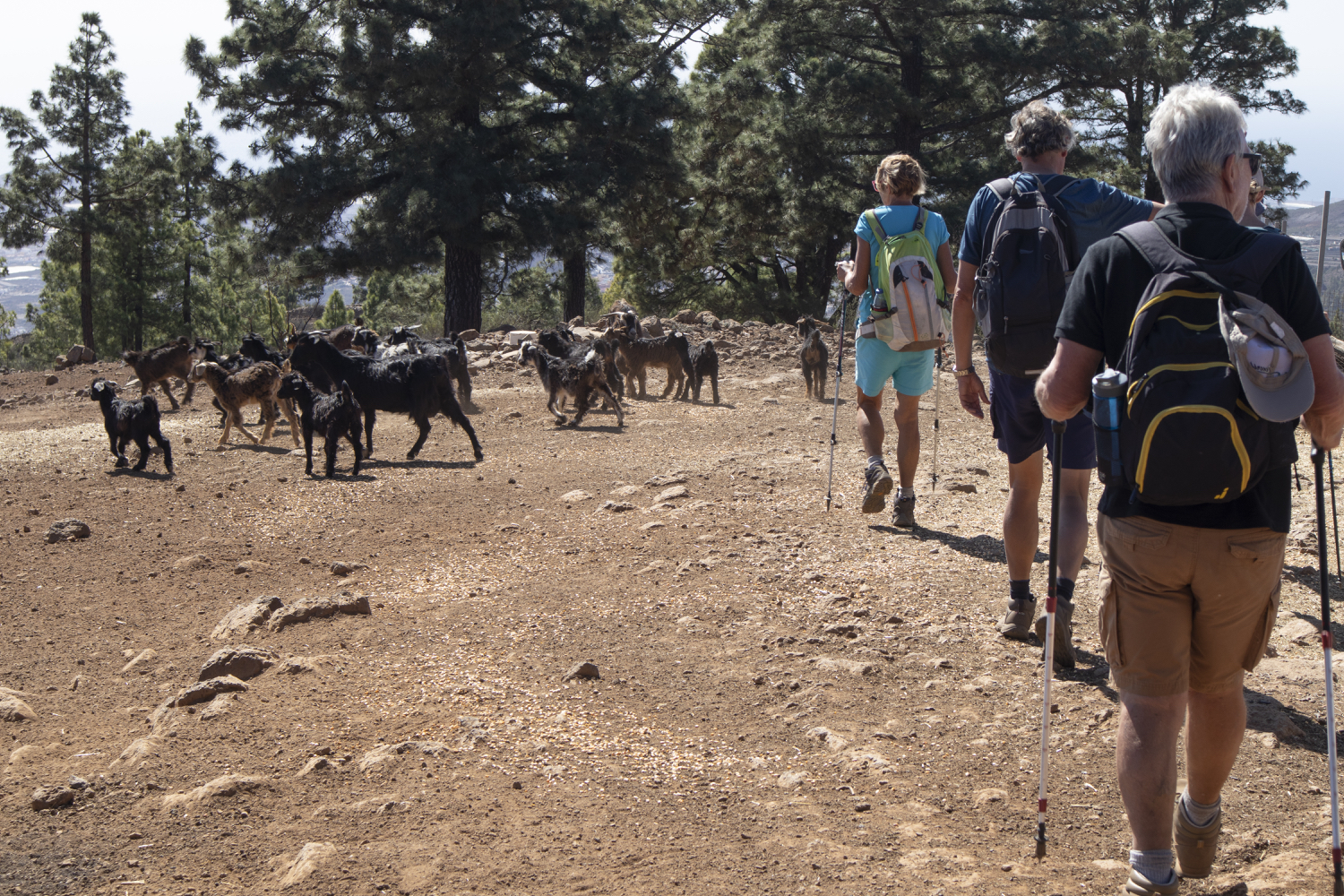 Hiking trail through a goat farm