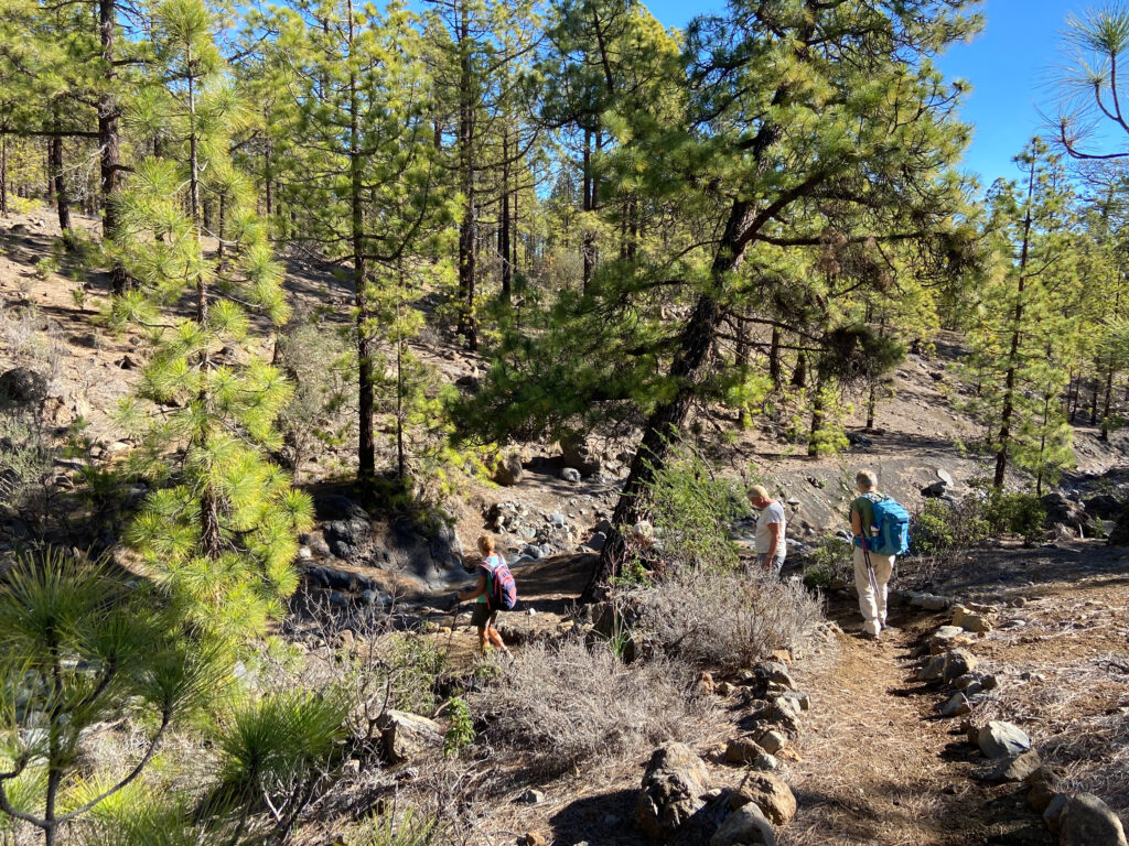 Hiking through the pine forest
