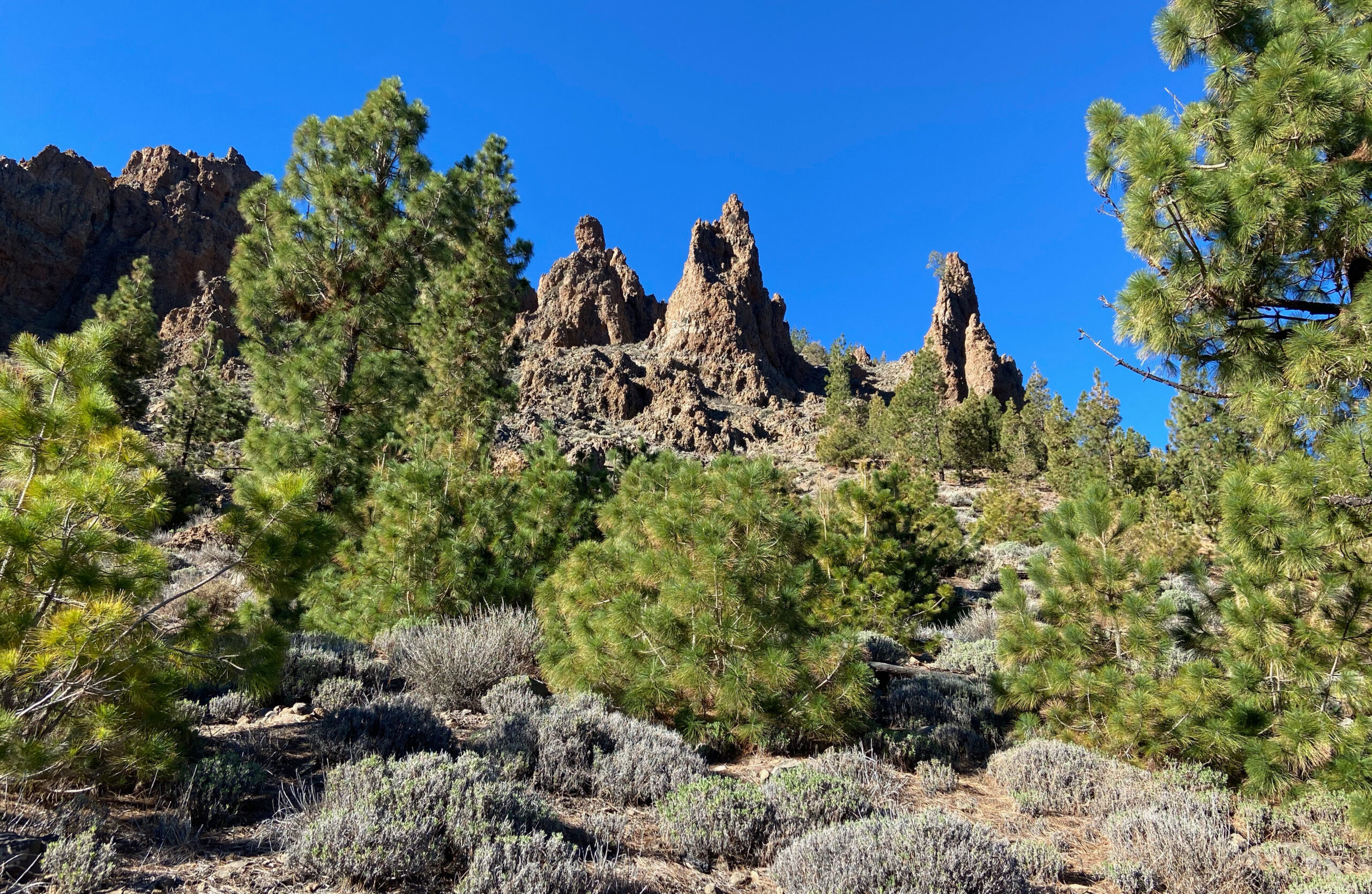 Green pines, jagged rocks and blue skies in the national park