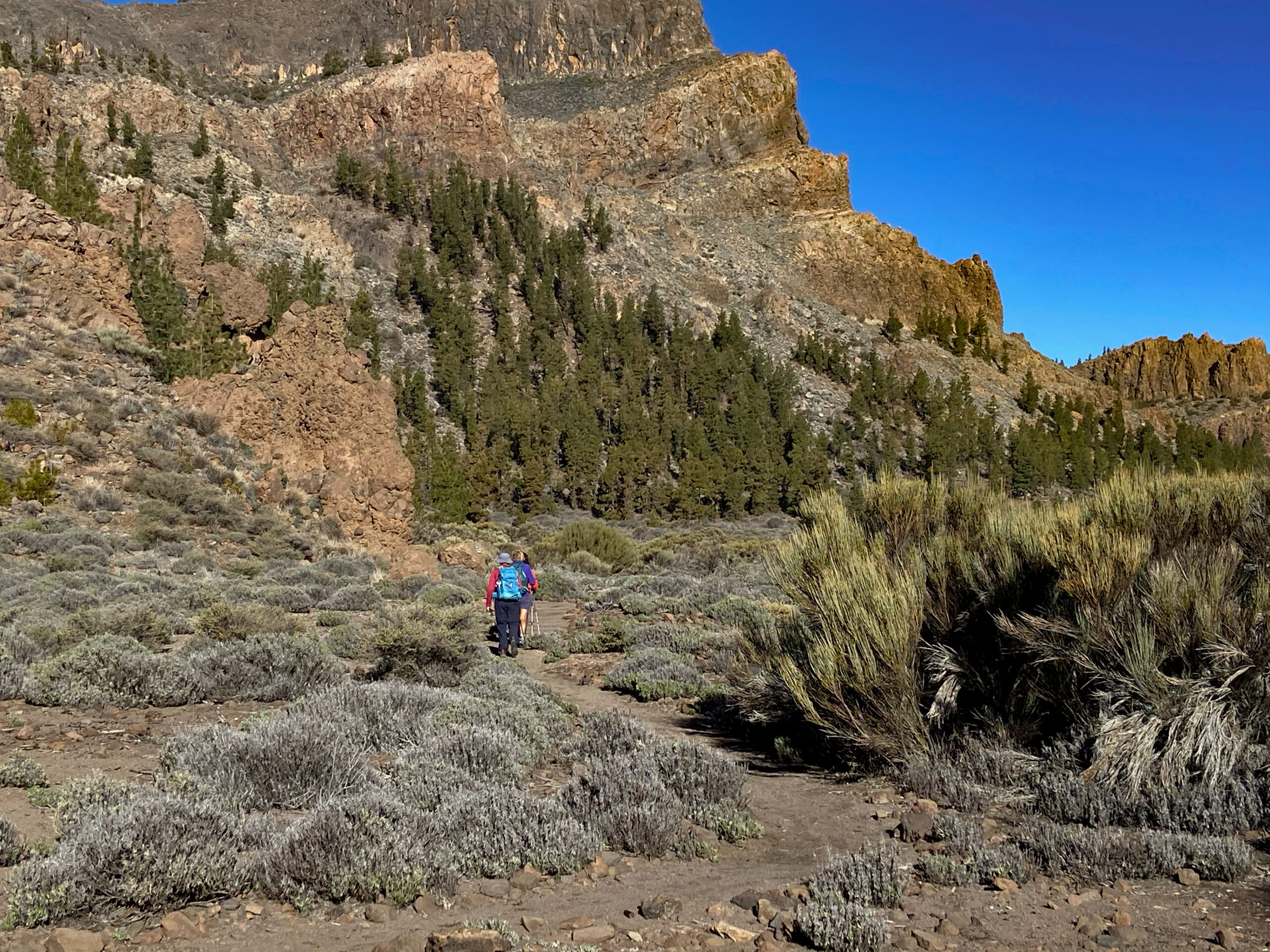 Hiking trail in the national park in front of Montaña El Cedro