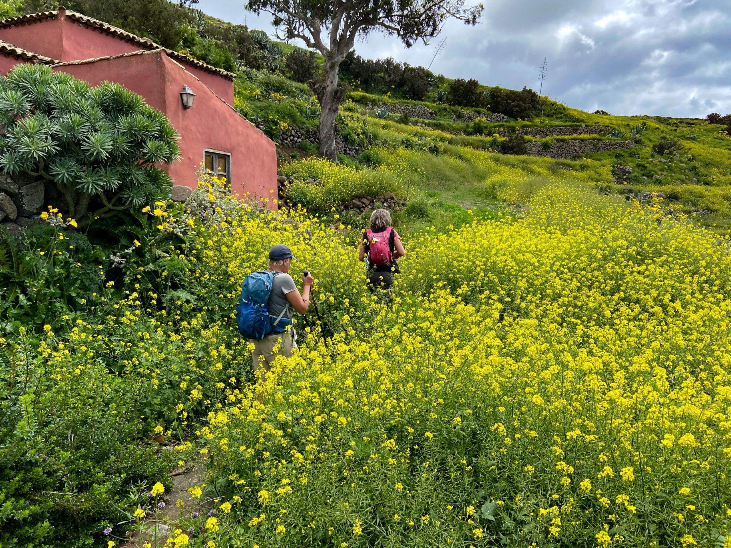 Hiking trail through green meadows and blooming flowers
